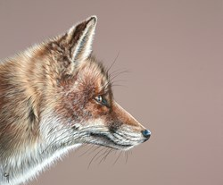 Fox by Gina Hawkshaw - Original Painting on Box Canvas sized 24x20 inches. Available from Whitewall Galleries