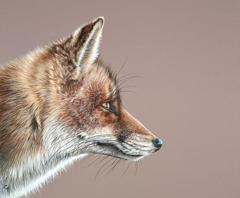 Fox by Gina Hawkshaw - Original Painting on Box Canvas